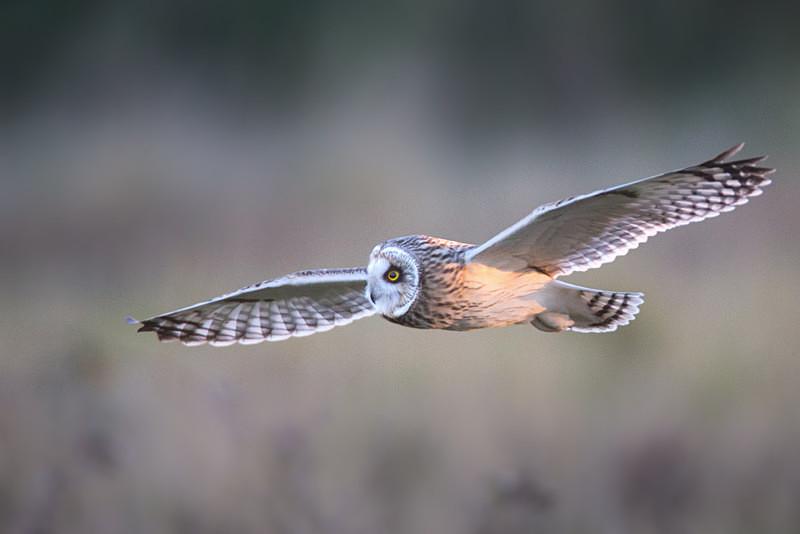 - Birds of Prey and Owls