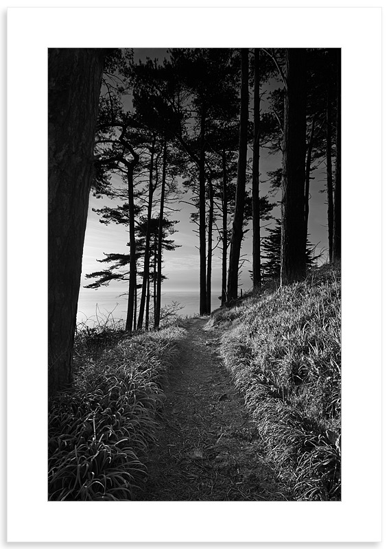04140436 - Marble Bay Pine Forest - New Work