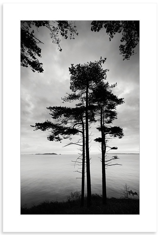 04140503 - Marble Bay Pine Forest - New Work