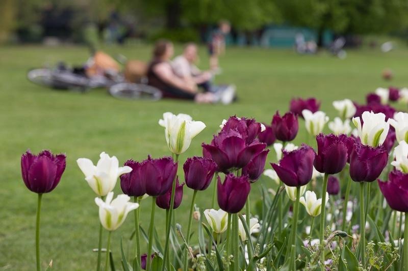 ILI-Cambridge__MG_5027 - Cambridge Botanical Garden & Spring Workshop