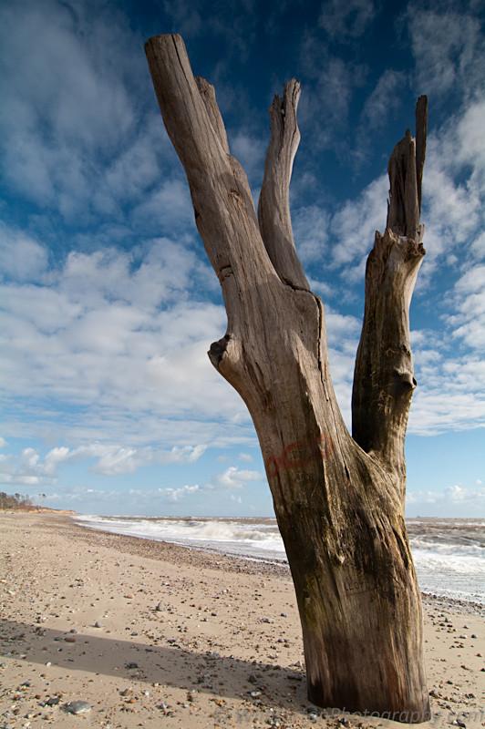 Benacre Beach Tree Photo, Suffolk