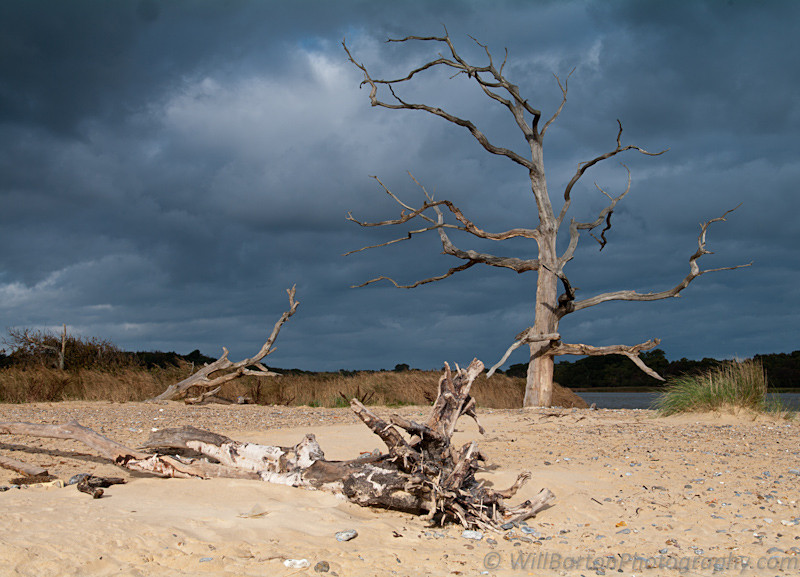 Covehithe Beach Tree Photo, Suffolk by Will Barton Photography