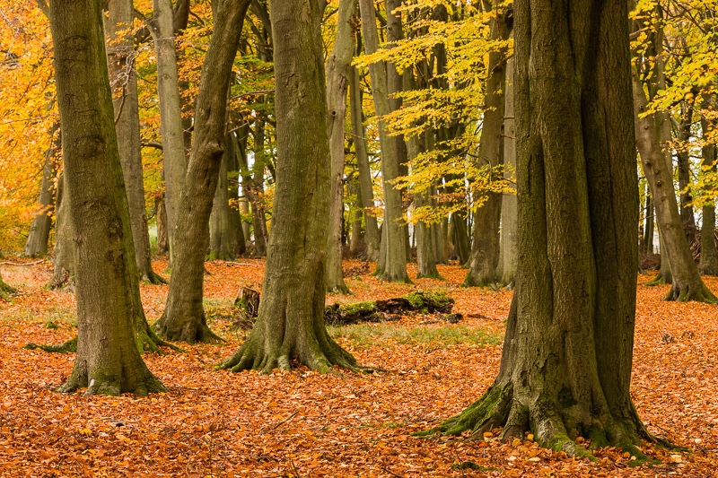 - Woodland & Forest Pictures