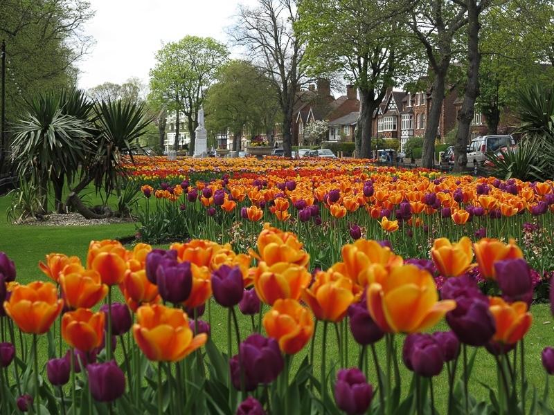 ILI_Bedford_IMG_3411 - Bedford Embankment - Courses & 1-2-1's