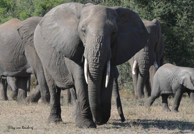 Mom - Elephant