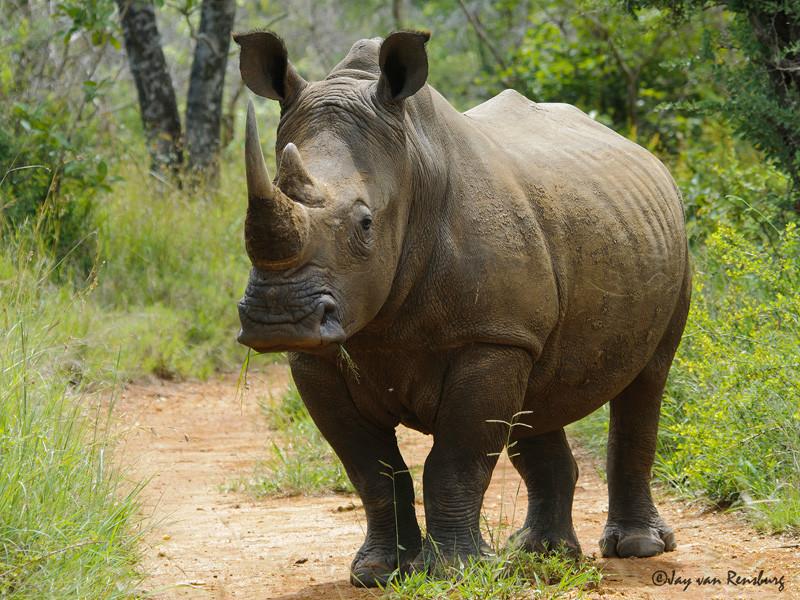 Alert! - Rhino