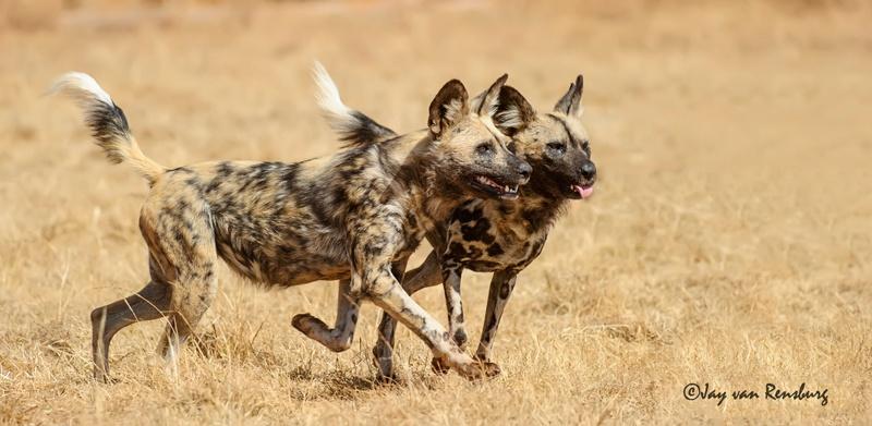 Alert - Carnivores