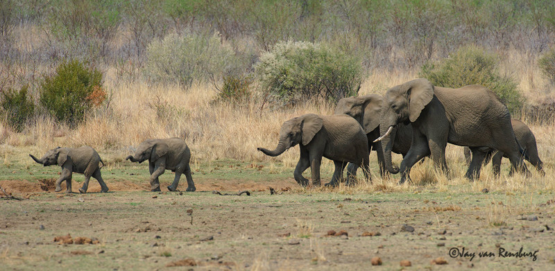 Family outing - Elephant