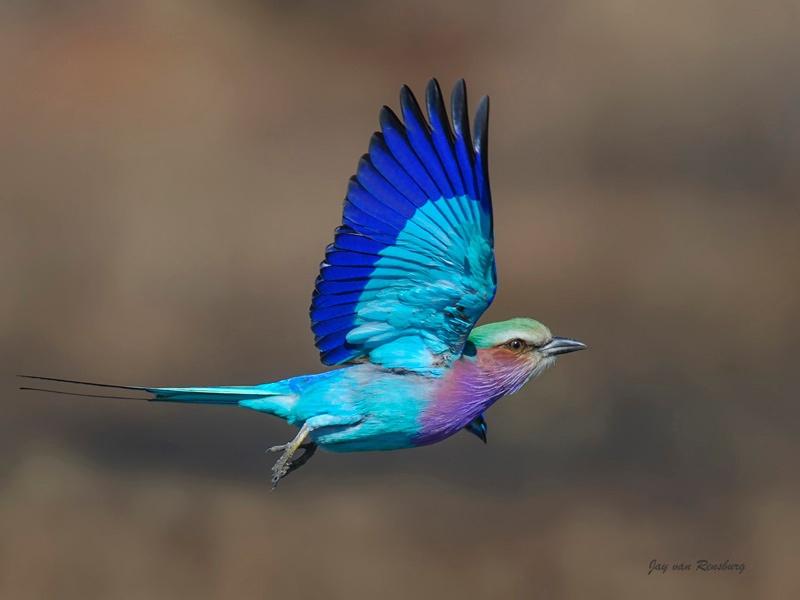LBR 1 - Birds