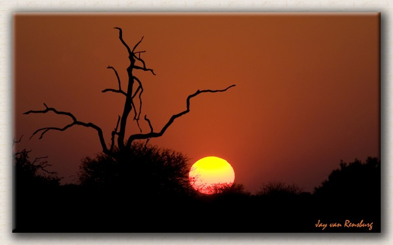 African Bush Sunset - African Sunset