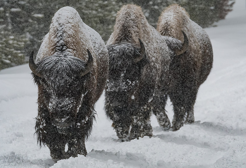 - Yellowstone