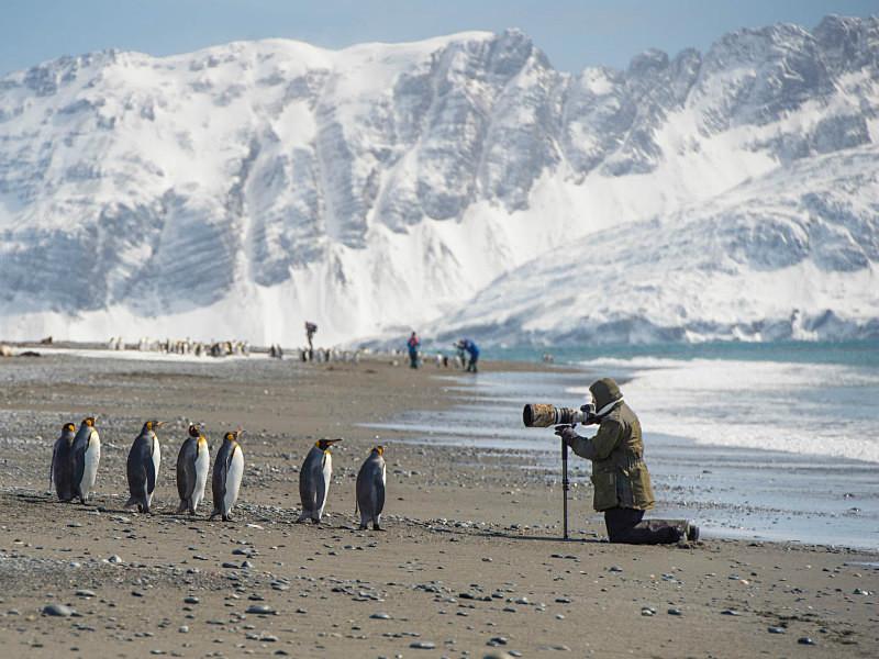 - South Georgia and the Falklands