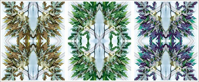 Leaves trilogy - Leaves