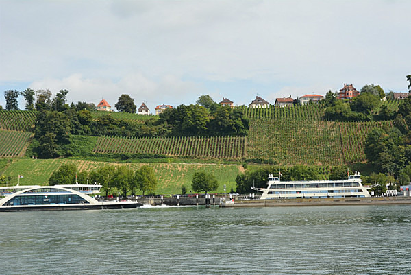 Vineyards along the lake - Our Travels