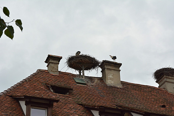 Nesting on chimneys - Our Travels