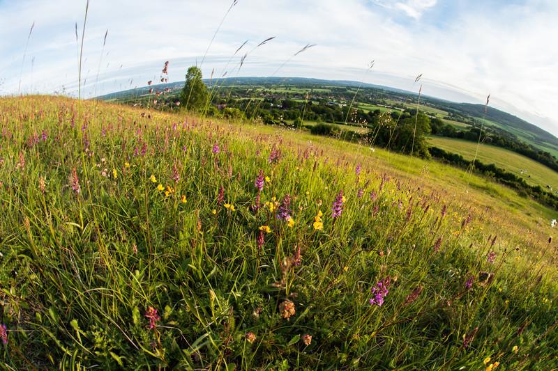 The Garden Of England - Landscape Photography