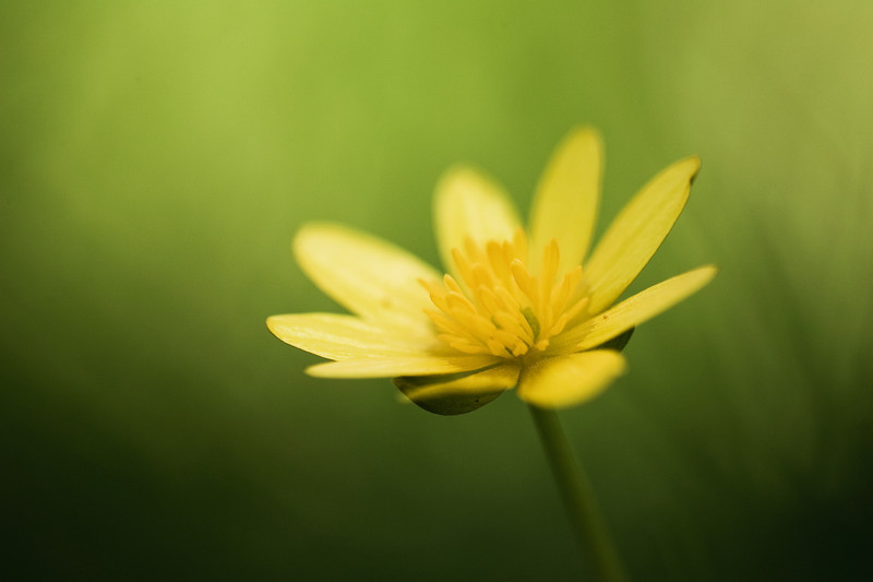 Summer Flower. - Moods