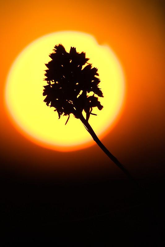 Sunset - Moods