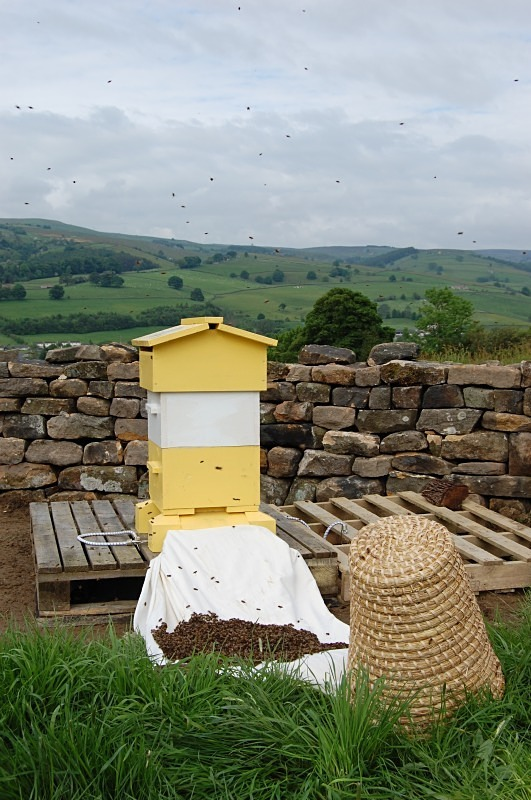 - The Bees!