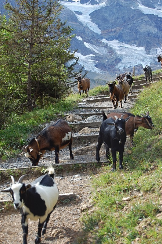 - Upper Lauterbrunnen Valley, Switzerland, August 2012