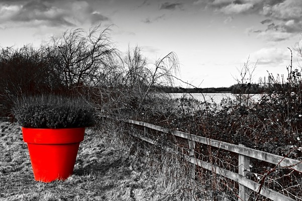 Lake and Red Flower-Pot - Red