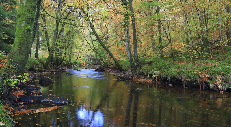Autumn on the Teign - Dartmoor Landscapes Prints
