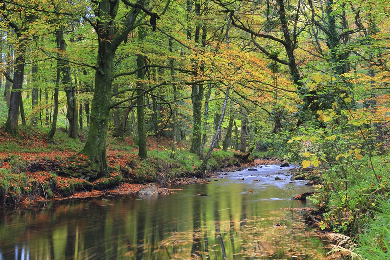 River Teign Swirl - Dartmoor Landscapes Prints