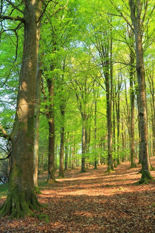 Wood Woodland