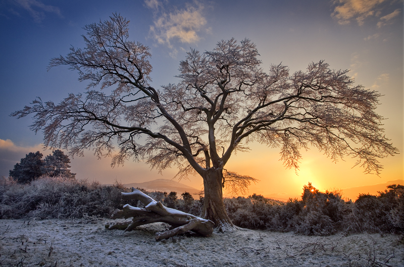 Winter Sunset in Derrymore Woods in Bessbrook, Co Armagh in Northern Ireland