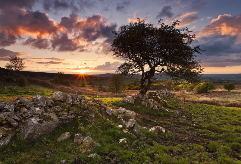Tree at Sunset - Co Armagh