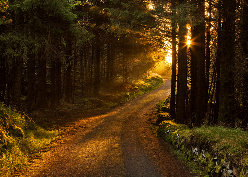Autumn Sunrise in Camlough Mountain Forest Drive, Co Armagh in Northern Ireland
