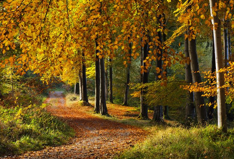 Woodland Walk - Co Down