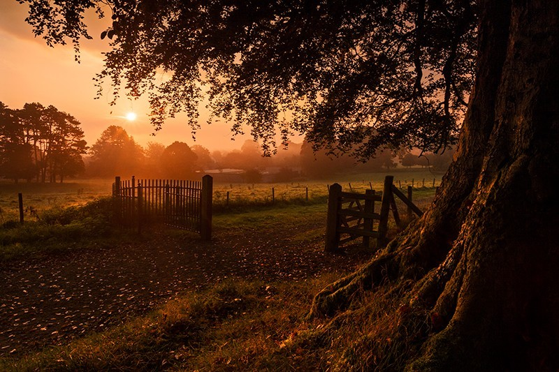 Autumn Sunrise in Derrymore - Co Armagh