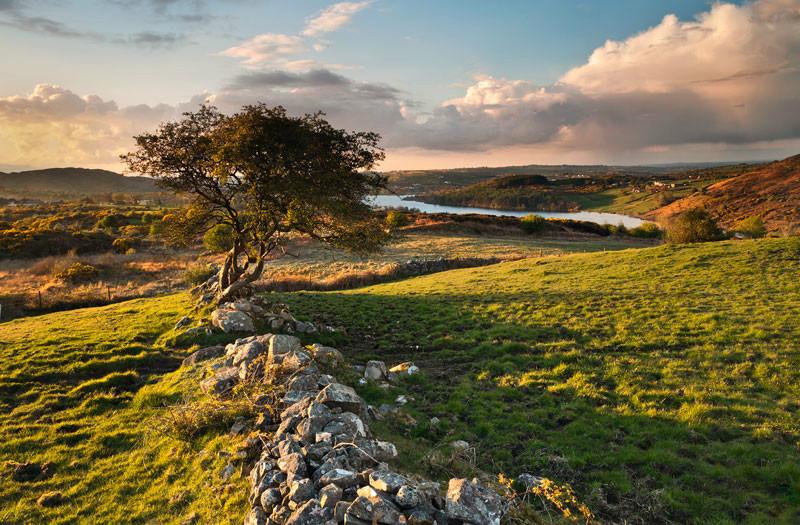 Ballynalack Tree - Co Armagh