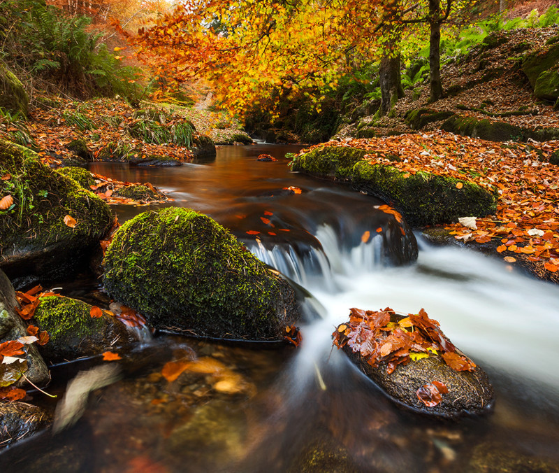 Colours Of Autumn - Co Wicklow