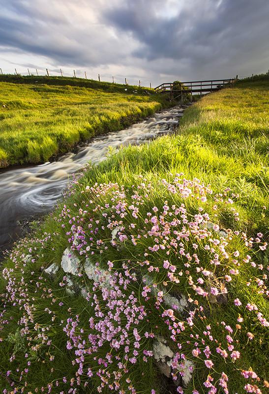 Coastal Bloom - Co Antrim