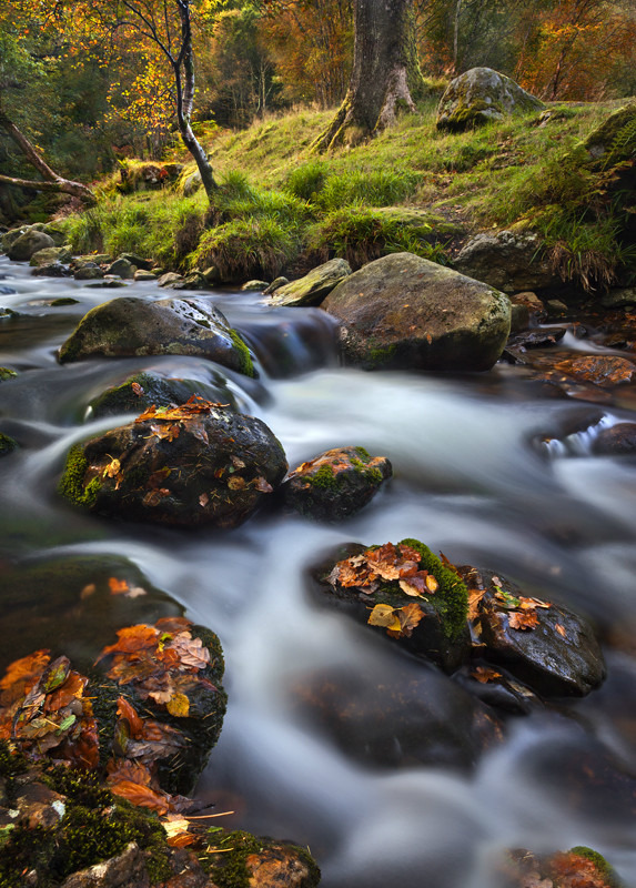 Autumnal Flow - Co Wicklow
