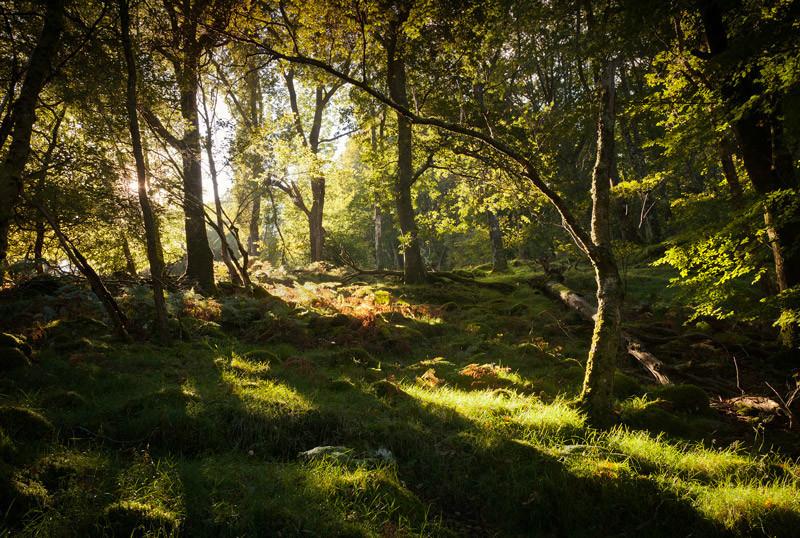 Wicklow Woodland - Co Wicklow