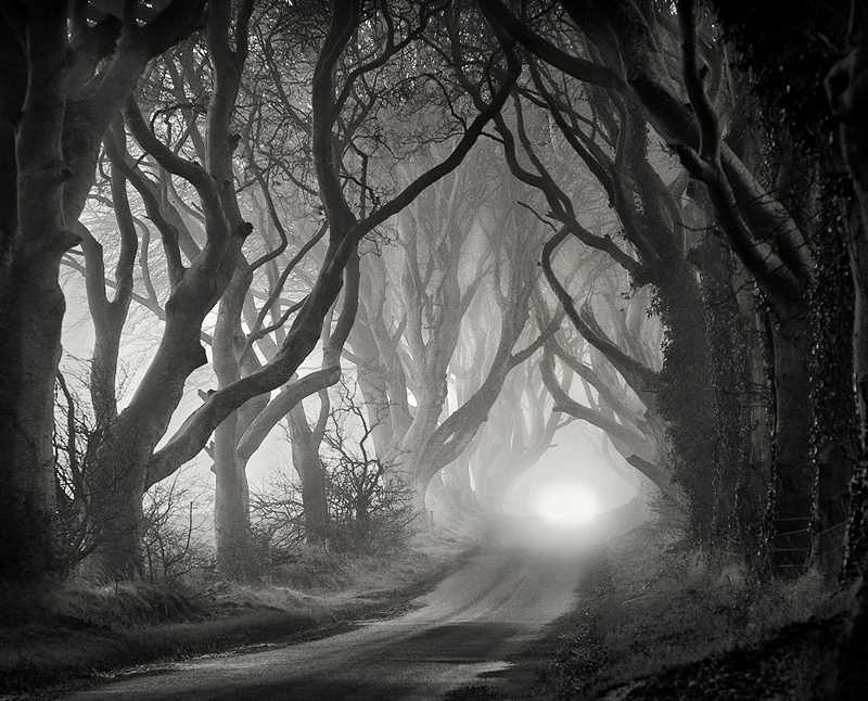 The Dark Hedges - Black & White