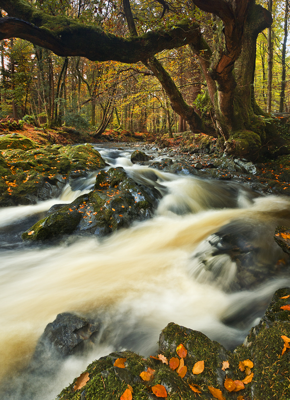 Autumn in Tollymore - Co Down