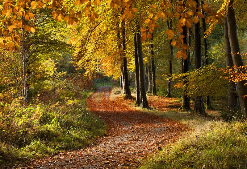 Autumn Walk - Co Down