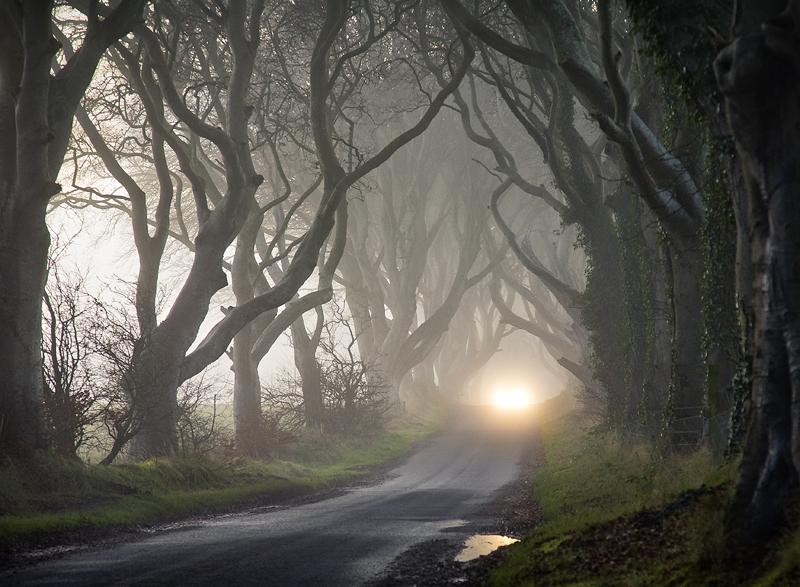 The Dark Hedges - Co Antrim