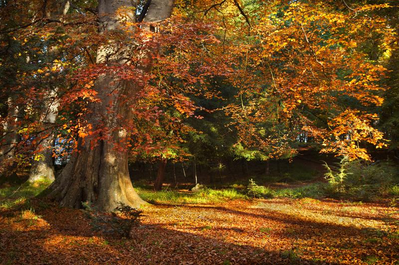 Autumn Colour - Co Down
