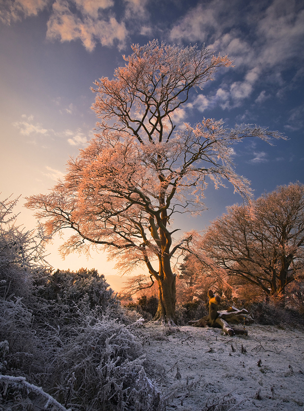 Warm Winter Light - Co Armagh