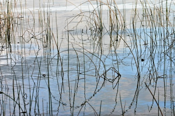 Evening Reeds - At the Water's Edge