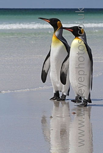 Watching Kings - Penguins