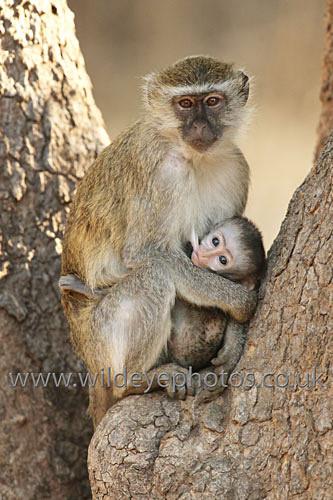 Monkey Life - Primates