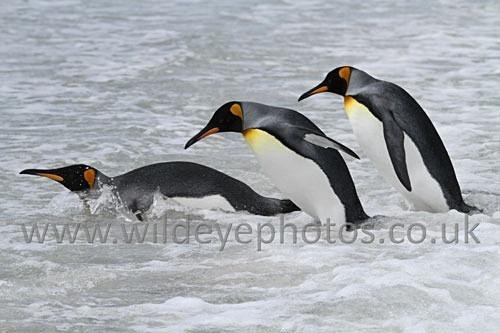 Kings Going In - Penguins