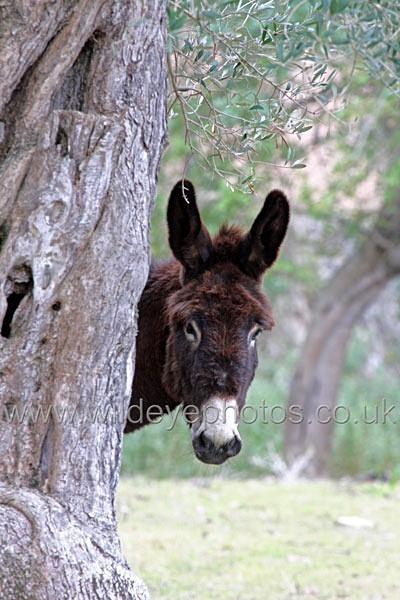Donkey - Wildlife