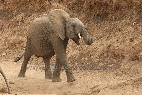 Shaking On The Bank - Elephants